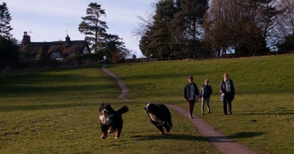 spring i parken